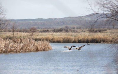 Bighorn River Duck Hunting Property (Fort Smith, MT)